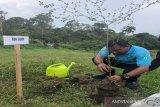 Polres Majene tanam pohon kembalikan hutan rusak akibat bencana