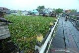 Kondisi sungai Kuin yang tertutup eceng gondok dan sampah yang terbawa arus sungai di Banjarmasin, Kalimantan Selatan, Jumat (10/1/2020). Keberadaan sampah di sungai tersebut mengganggu arus lalu lintas perahu kelotok yang menjadi salah satu moda transportasi warga setempat. Foto Antaranews Kalsel/Bayu Pratama S.
