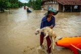 Warga menyelamatkan ternaknya dari banjir akibat tanggul Sungai Tuntang jebol di Desa Trimulyo, Guntur, Kabupaten Demak, Jawa Tengah, Kamis (9/1/2020). Menurut data Badan Penanggulangan Bancana Daerah (BPBD) Demak, tidak ada korban jiwa dalam peristiwa banjir yang merendam ratusan rumah warga tersebut. ANTARA FOTO/Aji Styawan/nz.
