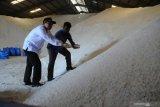 Produksi garam melimpah, ratusan ton tak tertampung di gudang PT Garam, Madura
