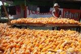 Petani menjemur jagung yang baru dipanen di Desa Galis, Pamekasan, Jawa Timur, Selasa (14/1/2020). Dalam sepekan terakhir harga jagung ditingkat petani di daerah itu turun dari Rp5.500 menjadi Rp5.000 per kg, karena stok mulai melimpah. Antara Jatim/Saiful Bahri/zk