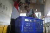 Petambak di Lampung Timur pilih budi daya udang vanamei