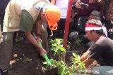 Penghijauan di Pegunungan Patiayam  Kudus butuh 600.000 bibit pohon