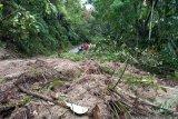 Banjir bandang dan longsor di Padang Pariaman rusak jalan dan bendungan