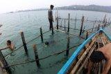 Nelayan Batam  berburu ikan dingkis dengan  kelong
