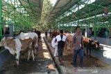 Pemkab Gunung Kidul melarang hewan ternak keluar dari Ponjong dan Rongkop