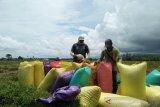Tahun 2019 surplus beras Parigi Moutong capai 125.000 ton