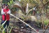6,5 hektare lahan Pekanbaru terbakar di awal tahun 2020