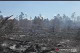 Lahan terbakar di Sungai Apit Siak, 10 embung dibuat untuk antisipasi
