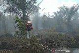 BBKSDA Riau tertibkan gubuk perambah di lokasi karhutla SM Giam Siak Kecil