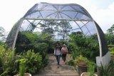 Kebun Raya Indrokilo