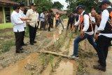 Jalan provinsi rusak ditanami padi, Nasrul Abit turun tangan
