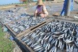 Pekerja menjemur ikan lemuru di Desa Tanjung, Pamekasan, Jawa Timur, Rabu (22/1/2020). Tingginya permintaan ikan kering lemuru dari sejumlah daerah, mengharuskan nelayan di daerah itu mendatangkan dari Muncar, Banyuwangi, karena tangkapan nelayan setempat tidak mencukupi. Antara Jatim/Saiful Bahri/zk