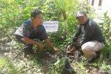 Mangrove Tanjungpunai destinasi wisata baru berbasis masyarakat di Kabupaten Bangka Barat