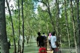 Wisata mangrove jadi harapan baru warga pesisir Tanjungpunai, Bangka Barat