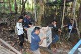 BKSDA evakuasi empat satwa dilindungi dari tempat wisata Rawen