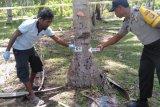 Gara-gara naik pohon kelapa, warga Dompu tewas dibunuh
