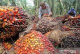 Harga sawit turun karena melemahnya permintaan CPO di pasar internasional