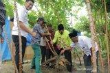 Panen ubi kayu di Kandis, Bupati Siak: lebih untung dari sawit