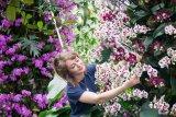 Kew Garden di London gelar Festival Anggrek Indonesia