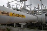 Harga minyak jatuh ke terendah tiga bulan karena dampak Virus Corona kian menyebar