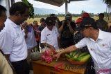 Produksi jagung petani binaan Bayer Indonesia 7,9 ton per hektar