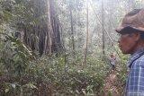Merawat hutan melalui budi daya madu