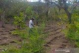 Distan Flores Timur data daerah potensial rawan pangan
