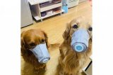 Anjing-anjing di China pakai masker khusus cegah corona. Ini penampakannya