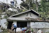 Tiga bangunan tertimpa pohon tumbang akibat angin kencang