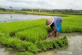 Kulon Progo menargetkan cetak sawah baru seluas 50 hektare