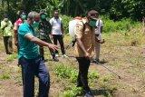 Ulat grayak serang Flores Timur, 4.585 hektare tanaman jagung terdampak