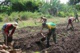 Prajurit TNI bantu warga buka lahan kebun di Sota Merauke