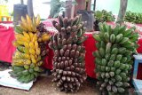 Kementan kembangkan pisang kepok komoditas ekspor