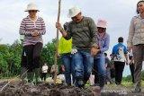 Pengembangan jagung di 15 desa dukung swasembada pangan Barito Timur