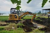 Usai dikeluarkan, berikut cara pemusnahan 10 ton bangkai ikan di Danau Maninjau (Video)