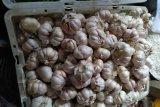 Harga bawang putih di Dharmasraya naik 100 persen, ini harga terbaru