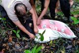 Warga temukan mayat wanita dalam karung di perbatasan Indonesia-Malaysia