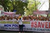 Ribuan orang demo di DPRD, tolak pemusnahan babi