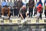 Desa Wirokerten peroleh hibah pengembangan kawasan budi daya perikanan dari Gubernur DIY