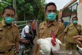 Dinas Pertanian Palembang siapkan vaksin  gratis cegah flu burung