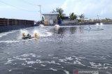 Petani tambak ikan bandeng di Pangkep panen dini antisipasi banjir