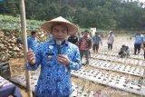 Operasi pasar bawang putih siap digelar di Batang