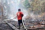 Siak paling luas terbakar di Riau, bupati heran