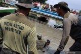 Prajurit Intai Amfibi 2 Marinir melakukan pencarian korban tenggelam di sungai Pucang, Sidoarjo, Jawa Timur, Kamis (13/2/2020). SAR gabungan yang terdiri dari Basarnas, Badan Penangggulangan Bencana Daerah, Tagana, TNI dan relawan masih terus berupaya melakukan pencarian korban dalam insiden tiga pelajar tenggelam di Kali Pucang Sidoarjo. Antara Jatim/Umarul Faruq/zk