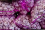 Stok aman, harga bawang putih di Jateng berangsur normal