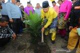 122,8 ha sawitnya diremajakan, Petani Empang Pandan Siak budidaya tumpang sari