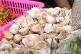 Harga bawang putih di Purwokerto turun