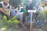 Polda Sulteng dan IOF tanam ratusan bibit pohon Eboni di Palu