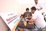 ACT galang bantuan 1.000 kursi roda bagi warga difabel Palestina